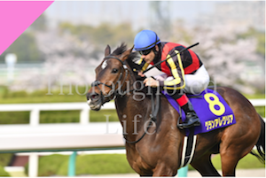 <br /> <b>Notice</b>:  Undefined variable: term in <b>/home/kusanagi/thoroughbred-life.net/DocumentRoot/wp-content/themes/horses_life/page-g1-race.php</b> on line <b>82</b><br /> <br /> <b>Notice</b>:  Trying to get property of non-object in <b>/home/kusanagi/thoroughbred-life.net/DocumentRoot/wp-content/themes/horses_life/page-g1-race.php</b> on line <b>82</b><br />